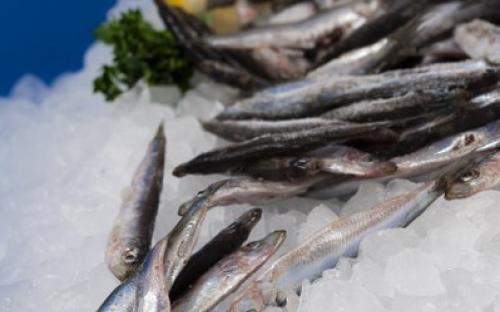 Замразена риба Солозамразена цаца